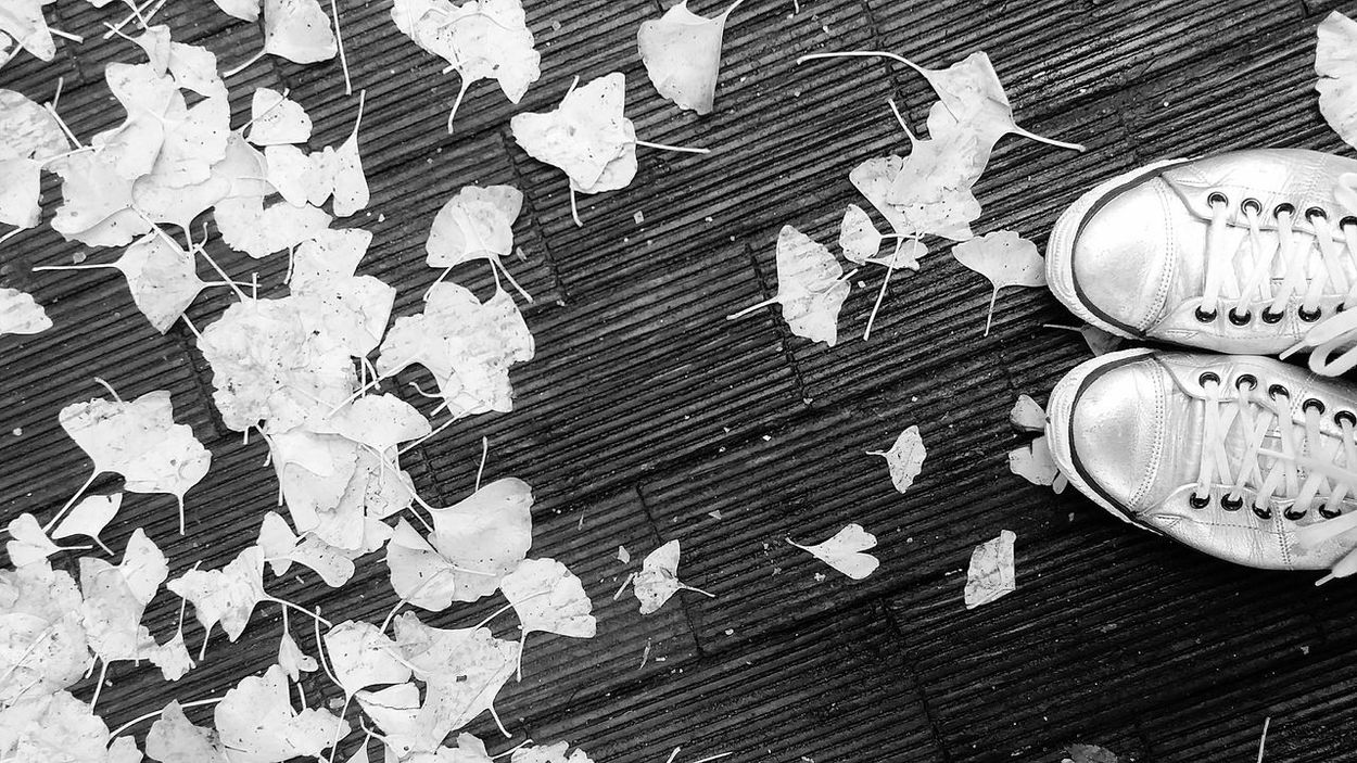 Ginkgo Ginkgo Leaves Ueno Park Tokyo Japan Tokyoautumm2016 Japanautumn2016 Tokyonature Japannature