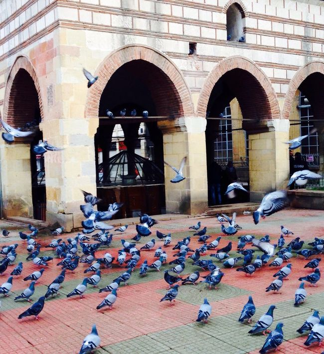 Bird Animals In The Wild Architecture Wildlife Built Structure Pigeon Building Exterior Arch Flock Of Birds In Front Of Resting Flying Togetherness Day Restaurant Person Zoology