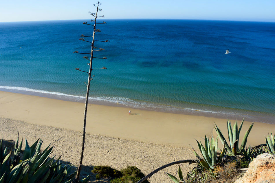 Beach Beauty In Nature Blue Coastline Horizon Over Water Idyllic Morning Morningjog Ocean Sand Sea Shore Tranquil Scene Vacations Water