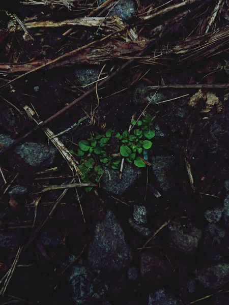 Focus On Foreground Rocks Dirt Ground Grass Green Lowlight Rainy Day Mobilephotography Dampfen Fallen Leaves Lowangleview