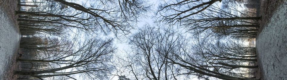 Which way is up? Or left? Abstract Forest Forest Photography Forestwalk Landscape Landscape_Collection Panoramic Side View Sunrise The Netherlands Veluwe