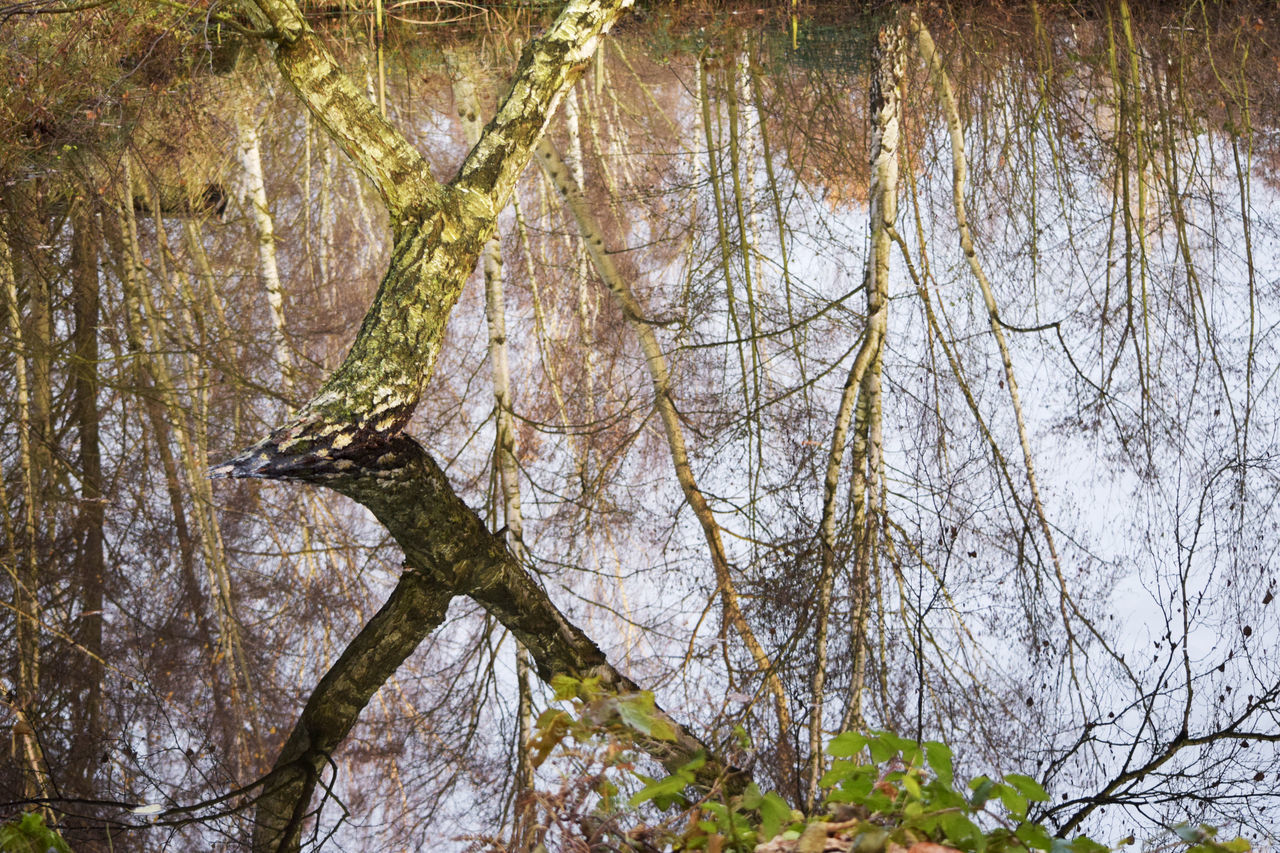 Trees reflecting confusingly in water Autumn Colors Beauty In Nature Branch Colors Of Autumn Confusing Day Forest Growth Leaf Mirroring In Water Nature Outdoors Pond Reflections In The Water Scenics Tranquility Tree Tree Trunk Trees And Nature Water Water Reflections