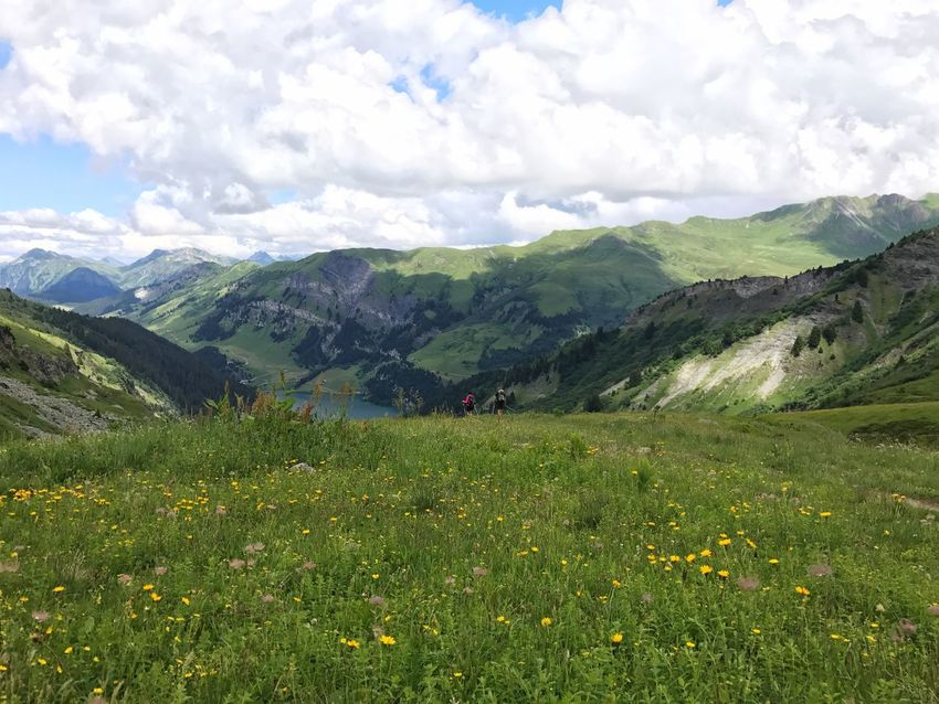Meadow Alps Grass Mountain Nature Beauty In Nature Sky Landscape Day Hiking Scenery Outdoors Peak Adventure Grass Travel Wilderness No People Scenics Freshness