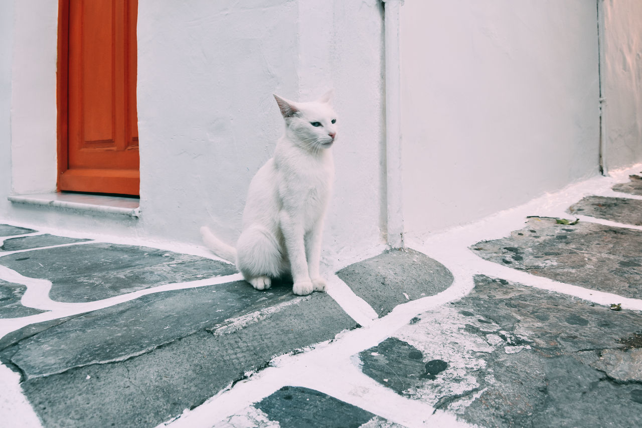 Animal Themes Architecture Cat Day Domestic Animals Domestic Cat Door Feline Looking At Camera Mammal No People One Animal Outdoors Pets Portrait Sitting Steps The Great Outdoors - 2017 EyeEm Awards The Portraitist - 2017 EyeEm Awards