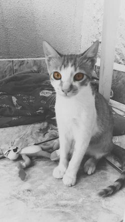 Cutecats Blackandwhite I Love My Cat ❤ Black & White Nice Photo ???
