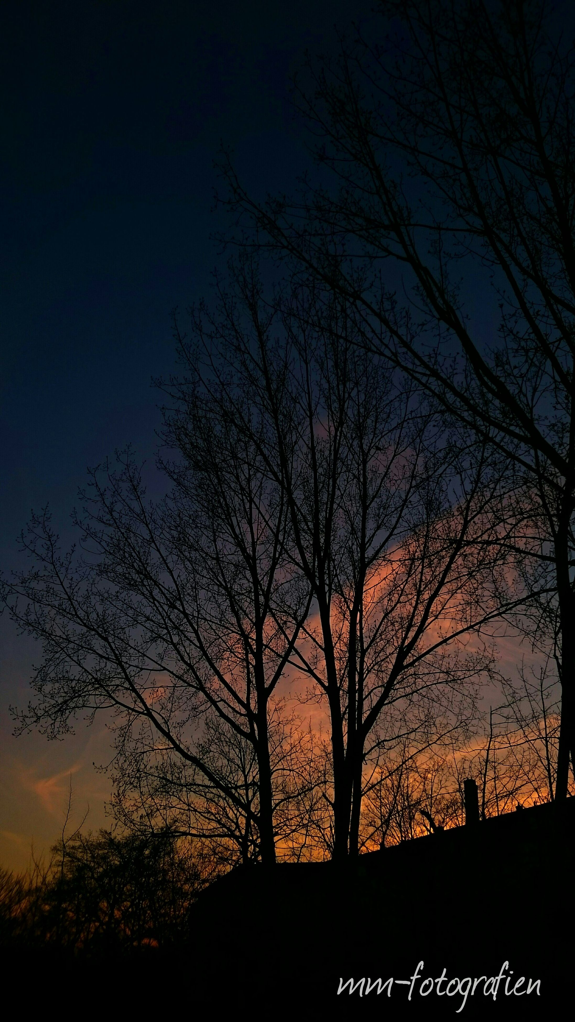 silhouette, bare tree, tree, branch, tranquility, sunset, tranquil scene, beauty in nature, nature, sky, scenics, low angle view, tree trunk, dusk, landscape, field, growth, outdoors, no people, idyllic