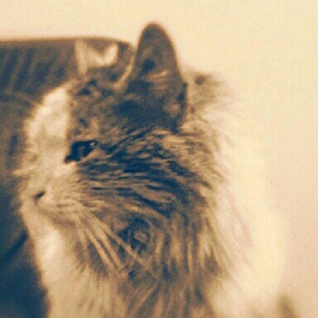 Cat Kedi Kirli Dirty Sokakhayvanlari Instaday Picday Picture Pictures