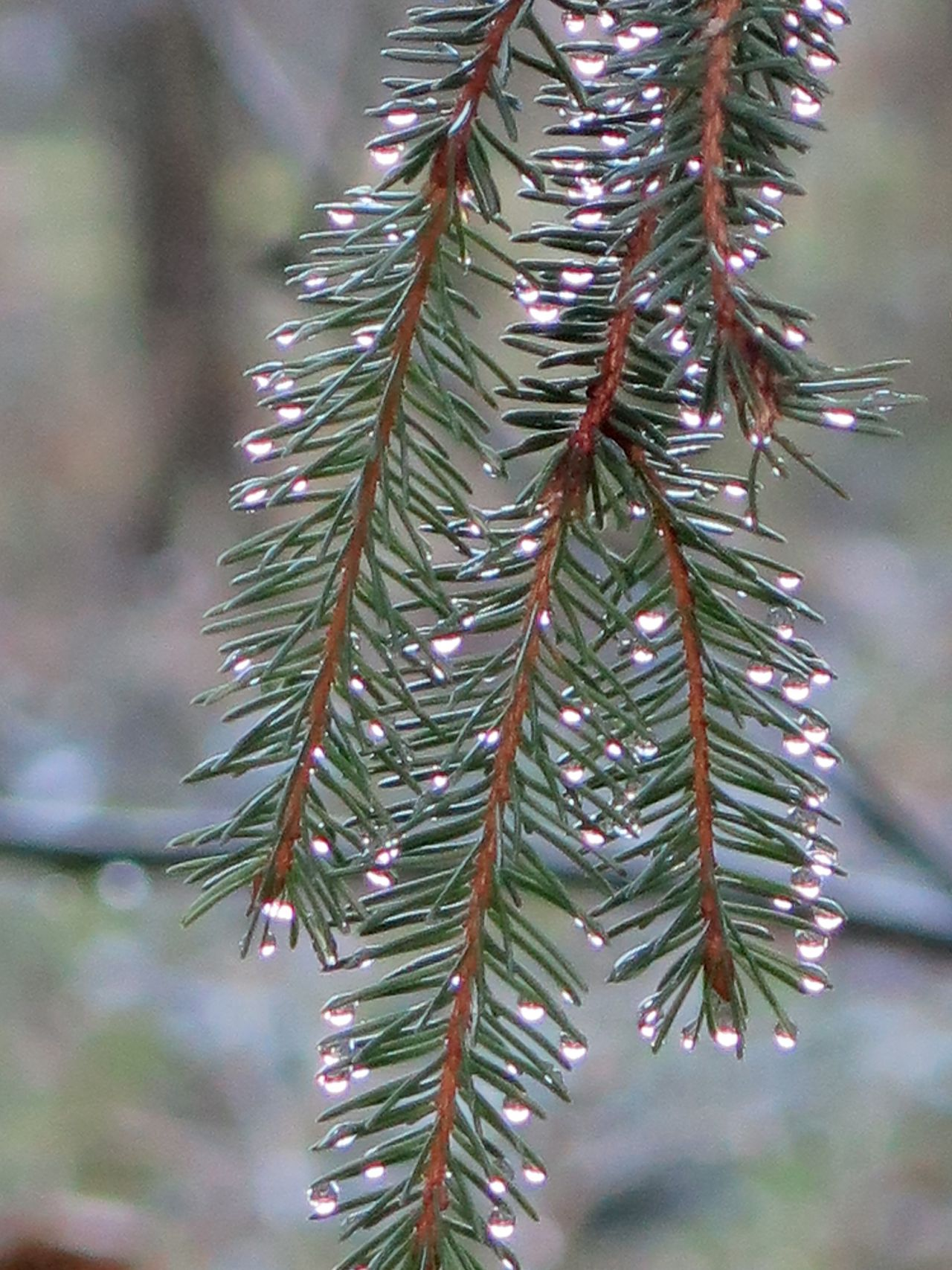 Forest Photography Nature Photography Nature Cold Days Naturelover Waterdrops