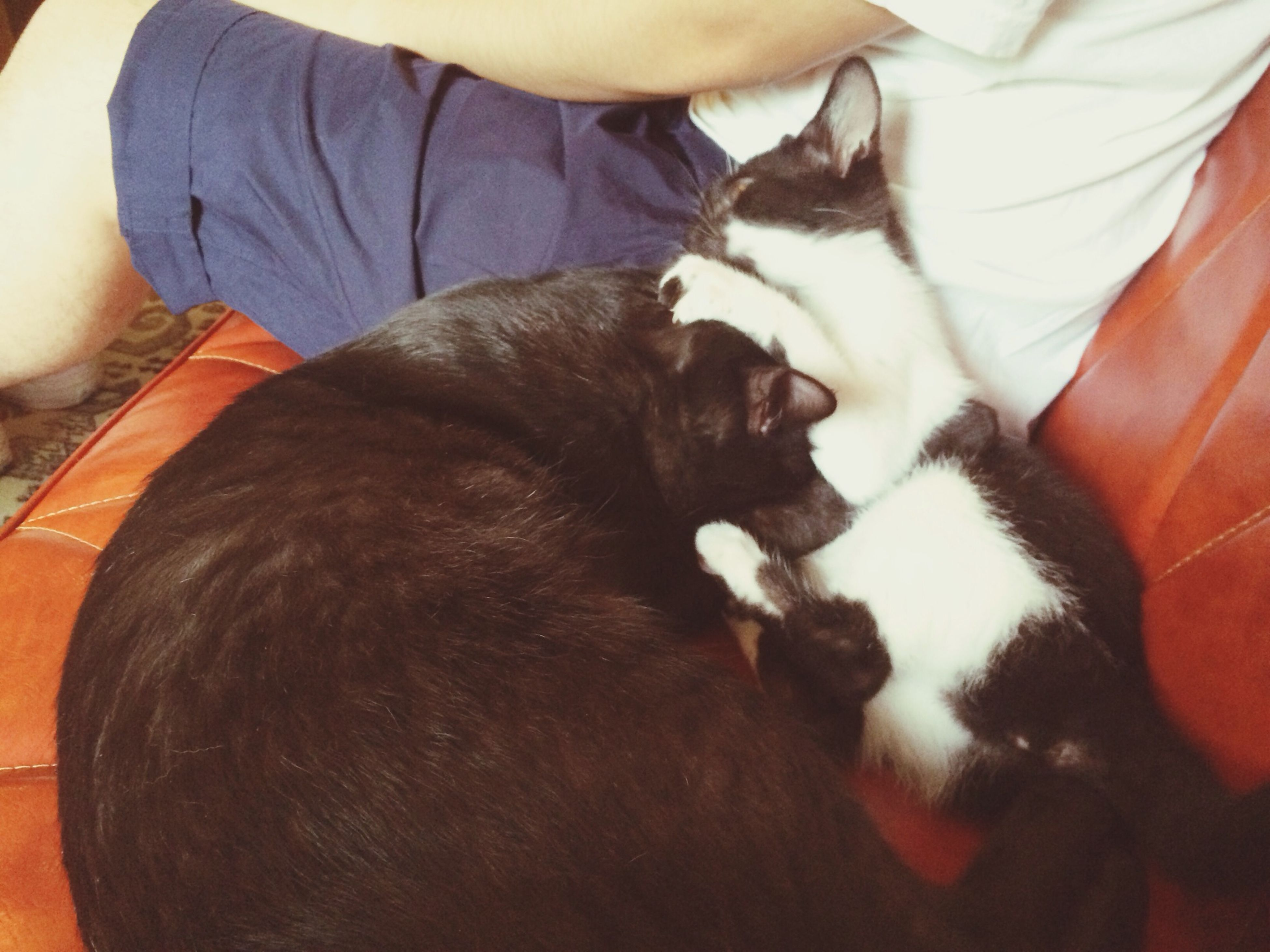 pets, domestic animals, animal themes, one animal, indoors, mammal, relaxation, domestic cat, resting, sleeping, togetherness, cat, bed, lying down, high angle view, pet owner, dog, home interior