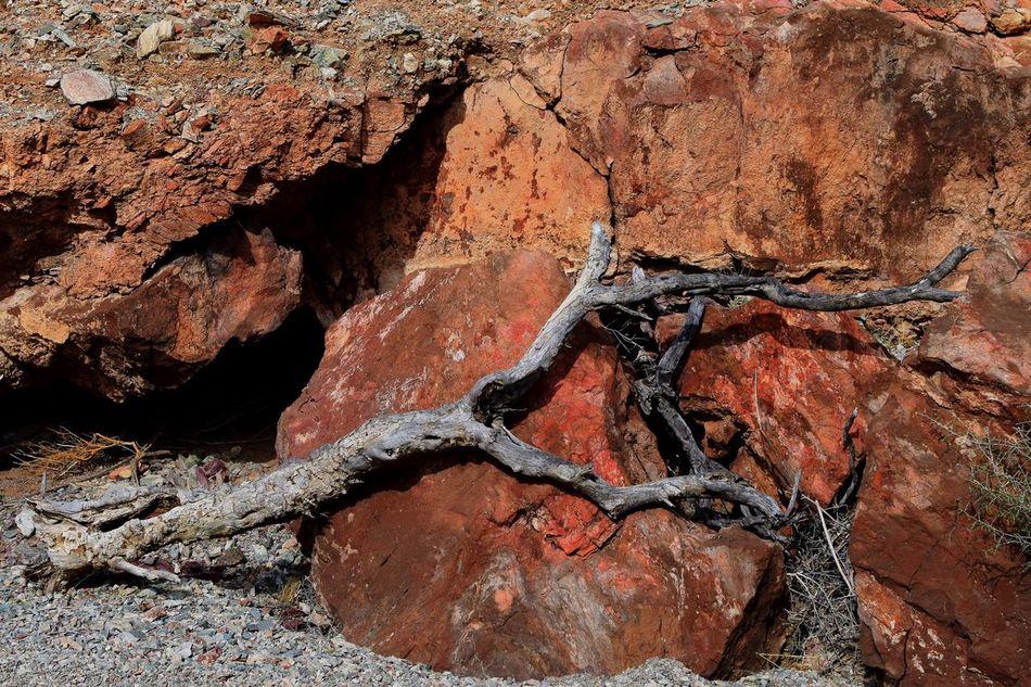 Desert Wash Desert Landscape Desert Arizona Desert Colors Rocks Red Rocks  Tree Branch