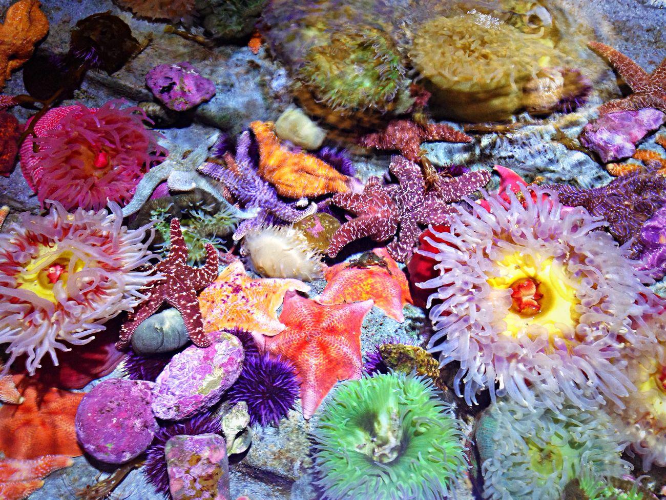 Anemone - Nemo's spring time under the sea Nature EyeEm Best Shots Taking Photos Enjoying Life