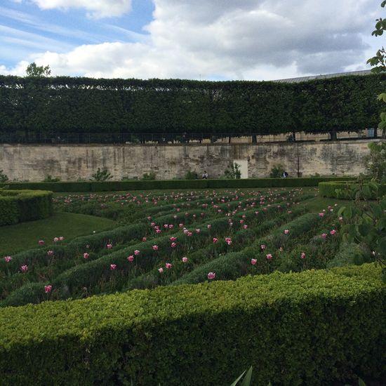 🌷🌷🌷🌷 Paris Champselysées Trip Garden Green Flowers Printemps Spring Lovely