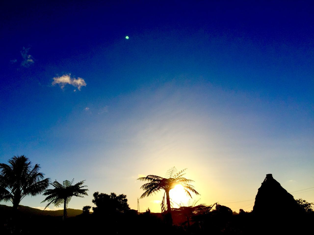 beauty in nature, silhouette, nature, scenics, tranquil scene, sky, moon, tranquility, sunset, low angle view, tree, blue, palm tree, no people, outdoors, growth, day
