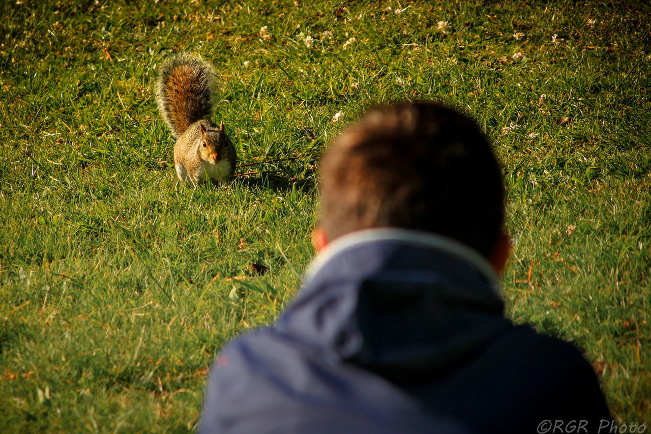 Animals In The Wild Catch The Moment Check This Out Child Childhood Memories Day EyeEm Gallery Face To Face Grass Greenwich Park Greenwich,London Looking Mammal Nature One Animal One Person Outdoors Park People Real People Rear View Sitting Squirrel Squirrel Closeup Ardilla