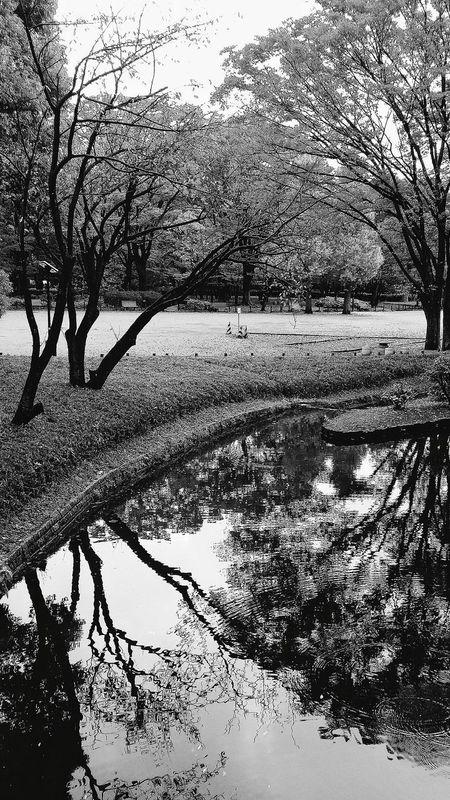 Trees Pond Reflections Publicpark Kitanomaru Park 1969 Autumn Tokyoautumn2015 Tokyonature Chiyodanature Enjoying Tokyo Nature EyeEm Nature Lover Naturelover Naturephotography Nature_collection Bnw Bnwphotography Bnwcollection Bnw_captures Bnw_world Bnw_tokyo Travelphotography Japan