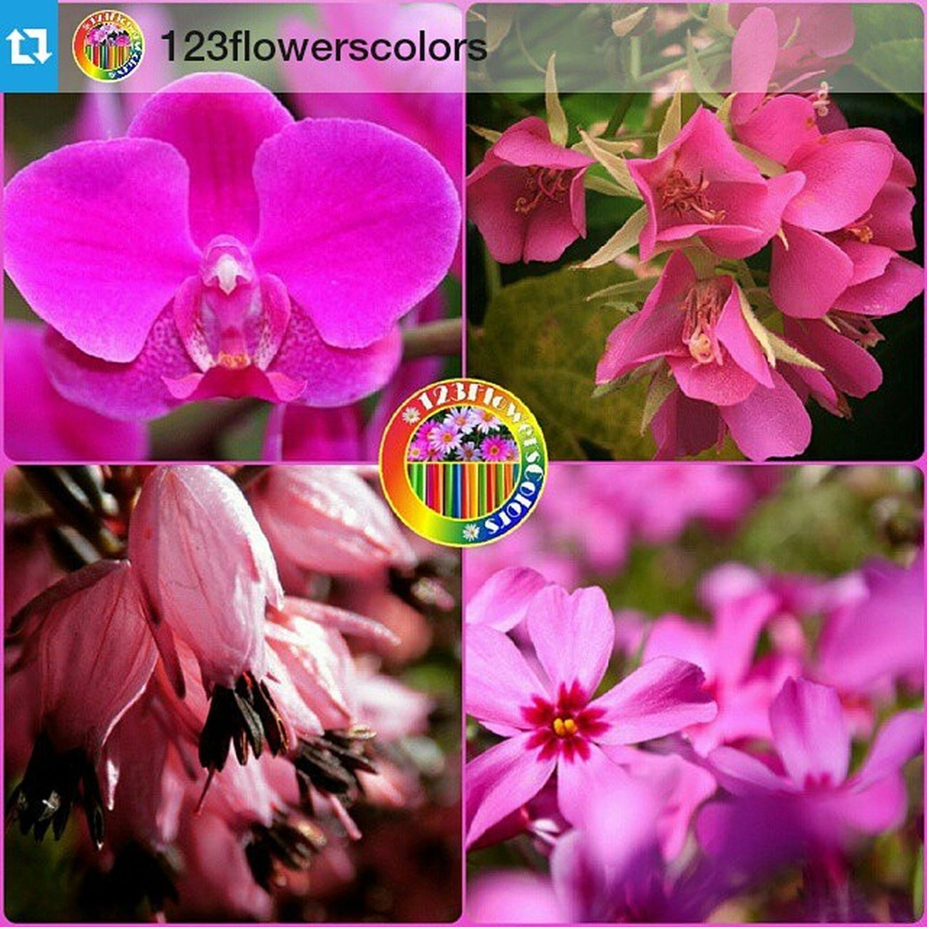 Thank you so much @123flowerscolors for featuring my picture! ・・・ . . 🎨 Set No. 🌹 1069 [09 - 04 - 2015] 🌈 . Hi! everyone. This set is the transit from PINK to RED! We are looking for shots around you in wonderful PINK and RED combined, can't resist to see your submission! Go, get tagging and join in the fun with us! ❤️🎀👠🌺🍓🌷🍒🌸❤️🎀🍓💞🌹 . Congratulation ! . 🎉💫 T/L @hipper66 ↖ 🎉💫 T/R @pinkie769 ↗️ 🎉💫 B/L @tibi888 ↙ 🎉💫 B/R @yokko2954 ↘️ . Tag your OWN photos to our TagS below : . 🎀123pinks for PINK ❤️123REDS for RED 🍊123ORANGES for ORANGE 🍋123yellows for YELLOW 🍀123GREENS for GREEN 🐳123BLUES for BLUE 💜123PURPLES for PURPLE 🌈123multi for MULTI-COLORS 🔳123BNW for BLACK&WHITE . Tag 123flowerscolors for the COMBINATION COLORS. . 🎨🌈 Selected by : @FiatForever 🌈🎨 .............................................................. .