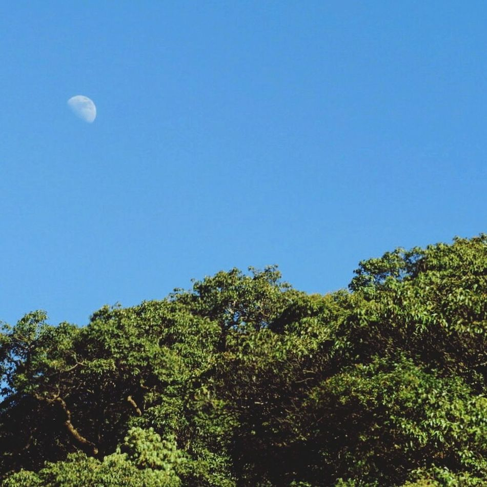 Moon Nature Tree Sky Blue Clear Sky Flying Beauty In Nature Scenics Growth No People outdoors Half Moon Morning Beauty Peace Happiness Day Nature Photography Landscape_Collection EyeEm Nature Lover EyeEm Best Shots Eyeemphotography Morningvibes TheWeekOnEyeEM Welcome To Black Long Goodbye EyeEmNewHere
