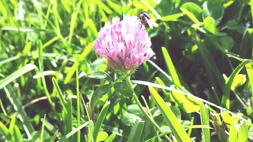 EyeEm Best Shots Open Edit For Everyone Open Edit Flowers,Plants & Garden Fotos Populares Happy Photography Day Enjoying Life Nature