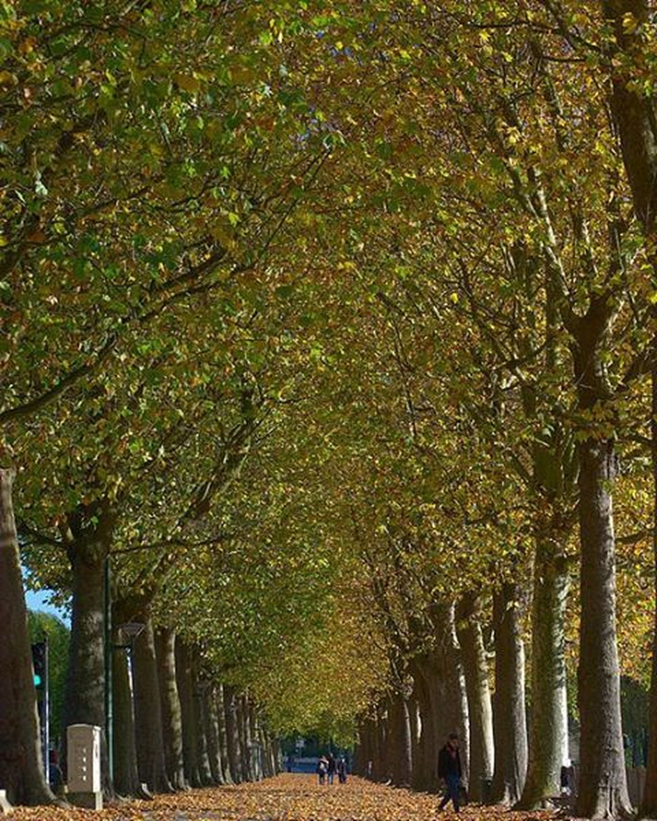 Such a lovely day in Caen ! Praerie Normandie Normandy Normandia  Insta_normandy IgersNormandie Promenade France Francia Francepower Travel Travelgram Mytravelgram Mytravelreviews Igers Igersfrance Instatravel Igtravel Calvados Nature Instanature TreePorn Leaves Pictureoftheday gramoftheday ic_trees tagsta tagsta_nature nofilter
