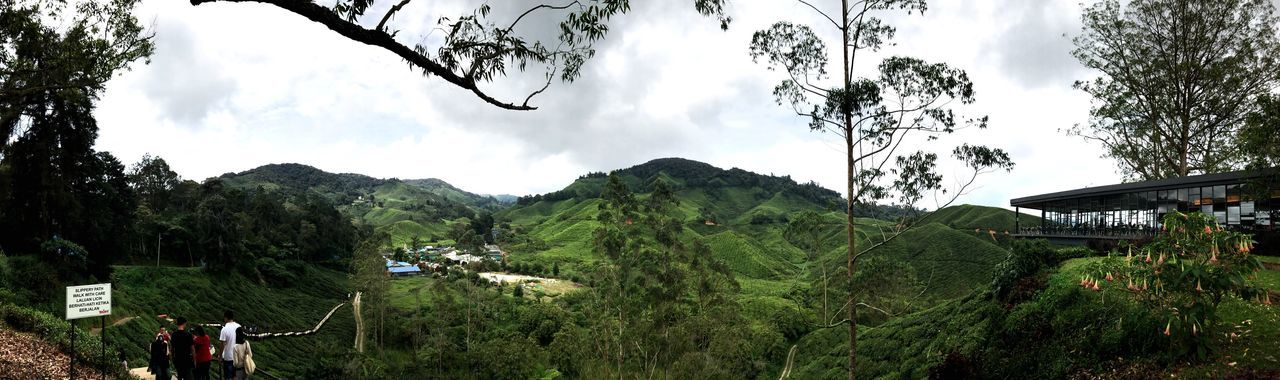 EyeEmNewHere Cameron Highlands Apple Nature IPhone7Plus Panorama Green
