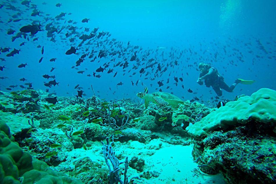 This was a very lucky shot Eye4photography  EyeEm Nature Lover EyeEm Best Shots - Nature Underwater Maldives Underwater Photography Turle Goprohero4 OpenEdit EyeEm Best Shots