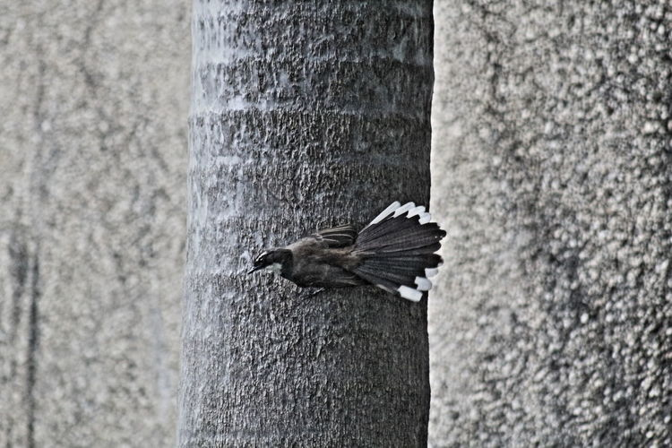 Animal Themes Animals In The Wild One Animal Day Bird Outdoors Animal Wildlife No People Nature Perching Close-up Spread Wings Black And White Photography Black Bird