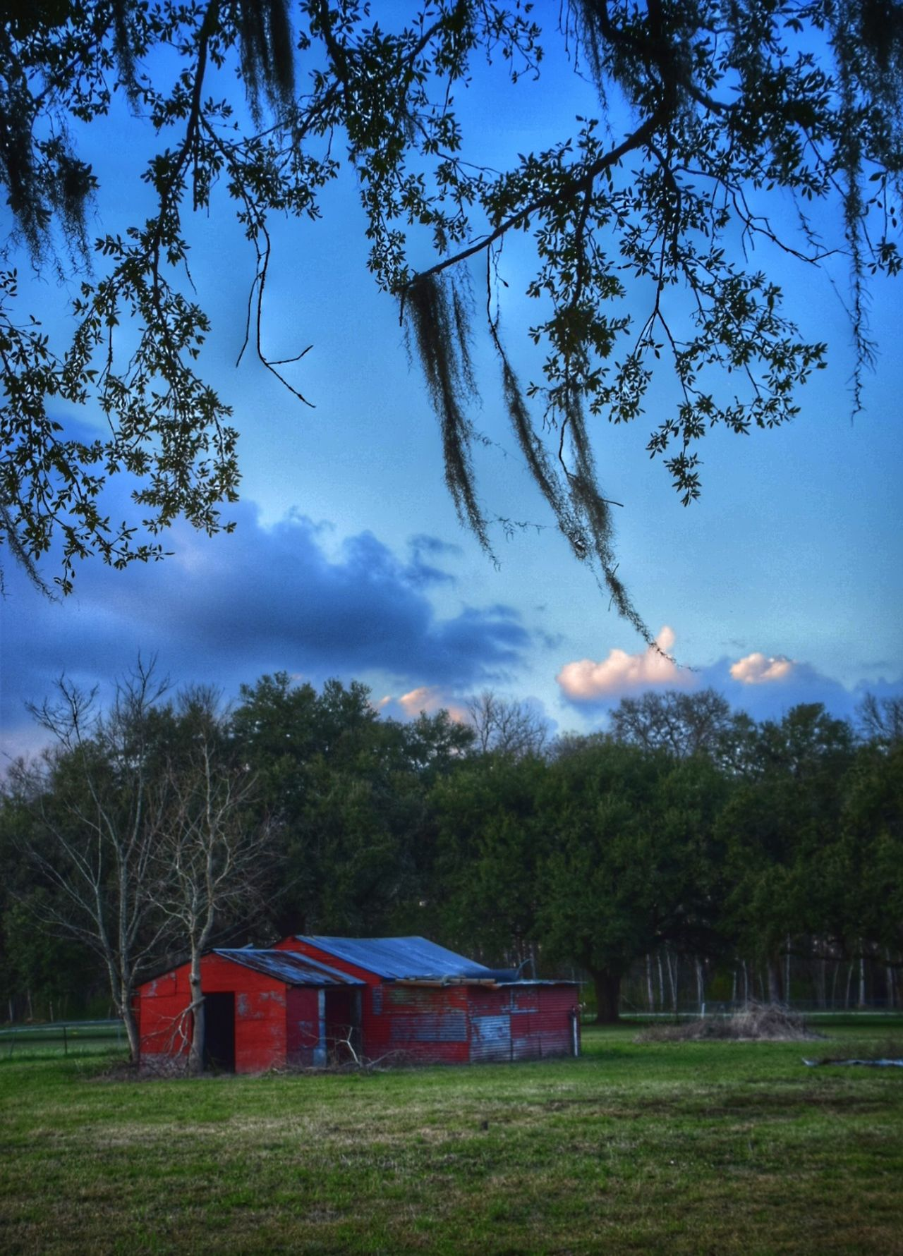 Our barn at sunset from a new vantage point Tree Cloud - Sky Sky Nature Green Color No People Outdoors Growth Grass Beauty In Nature Architecture Day Woods Metal South Louisiana Fields Photography Nikon_photography Clouds & Sky Rural Scene Red Barn Flea Market Barns Sky And Trees Built Structure Full Frame