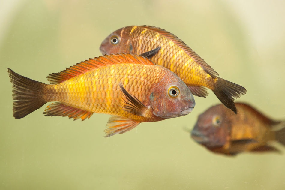Beautiful stock photos of fisch, Animal Themes, Animal Wildlife, Animals In Captivity, Aquarium