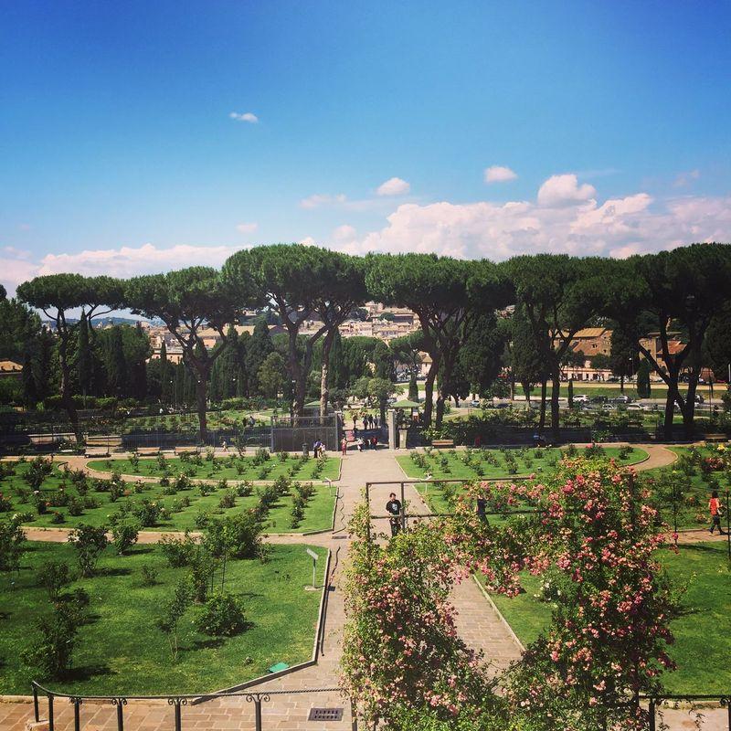 Rome Italy Roses Garden