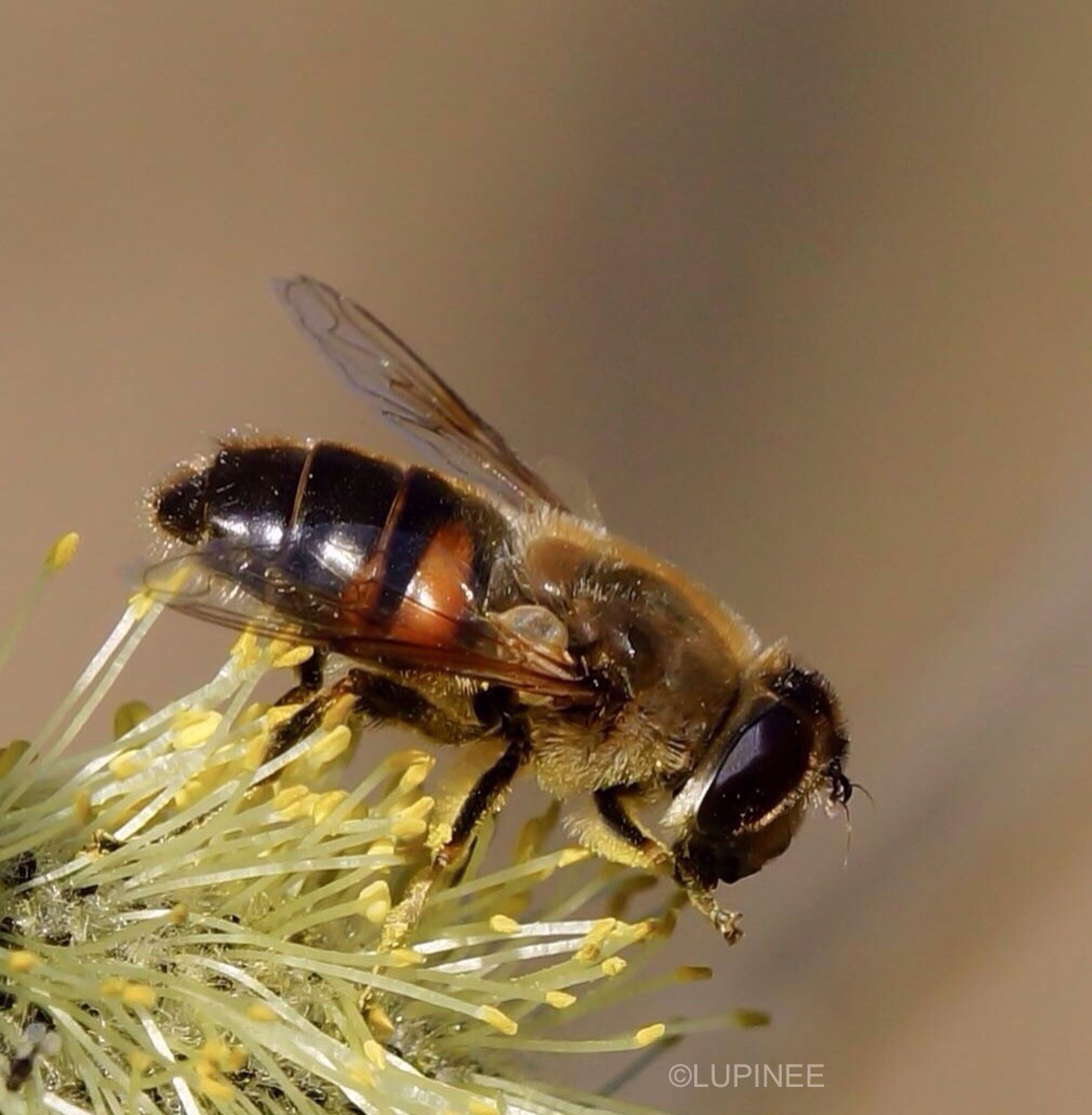 insect, animal themes, one animal, animals in the wild, wildlife, close-up, spider, bee, selective focus, fly, pollination, arthropod, no people, zoology, indoors, animal antenna, nature, focus on foreground, honey bee, housefly