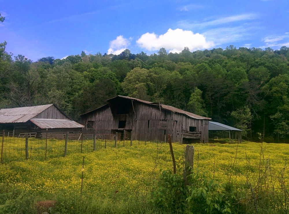 Sky Green Color Lush Foliage Rural Scene Tranquility Landscape Plant Scenics Green Field Old Barn Countryside Tennessee Country Life Country Fields