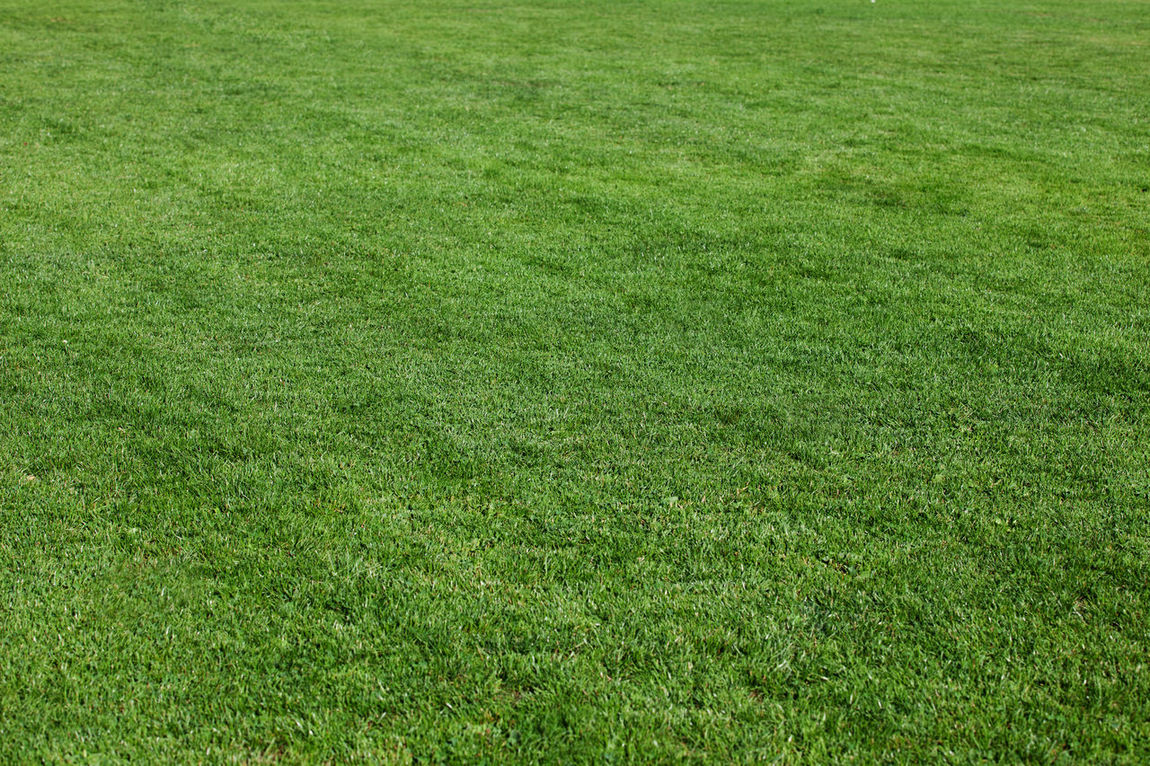 Mowed lawn Backgrounds Field Full Frame Grass Grass Green Green Color Lawn Mowing The Lawn Mown Mown Field Textures And Surfaces