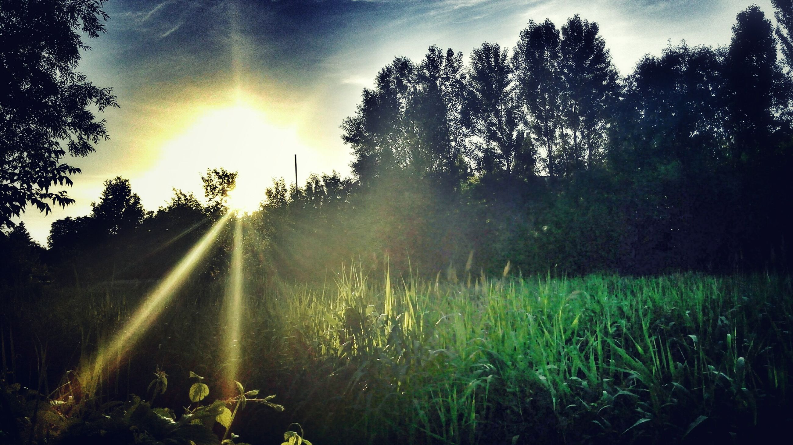 sun, sunbeam, grass, lens flare, sunlight, tree, field, tranquility, sunset, tranquil scene, landscape, grassy, growth, sky, nature, beauty in nature, scenics, green color, plant, idyllic