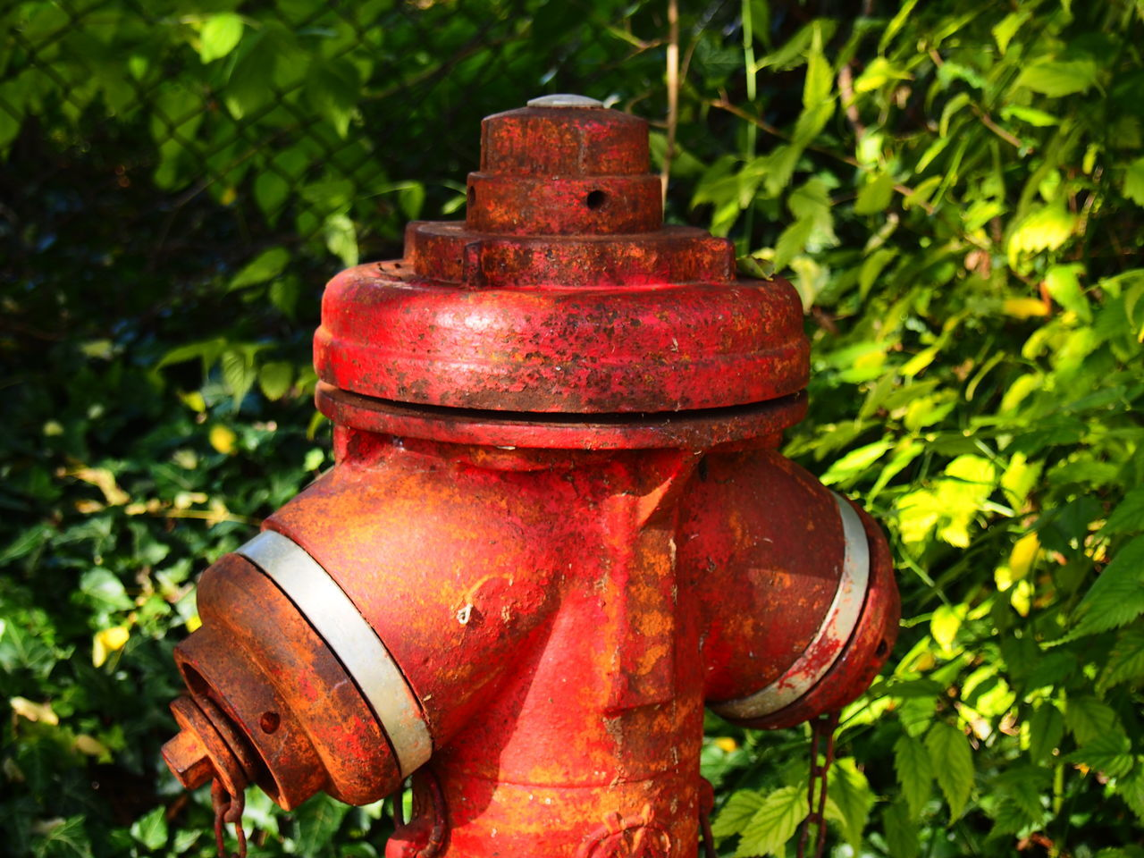 Close-up Day Fire Hydrant Green Color Metal No People Outdoors Red Rusty
