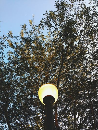 Low Angle View Street Light Lighting Equipment Tree Clear Sky Sky Outdoors No People Electric Light Scenics Non-urban Scene Mobile Photography Taking Photos Personal Perspective Tranquility Tranquil Scene Park Vibrant Color Shadow Man Made Object Absence
