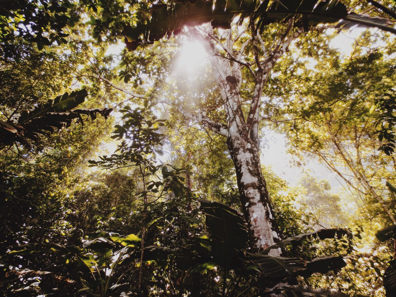 Rainforest Corcovado Rainforest Costa Rica Corcovado Tree Growth Nature Sunlight No People Low Angle View Beauty In Nature Outdoors Day
