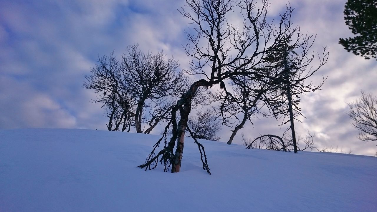 tree, sky, snow, bare tree, tranquility, nature, winter, beauty in nature, landscape, cloud - sky, tranquil scene, cold temperature, branch, outdoors, scenics, day, tree trunk, no people