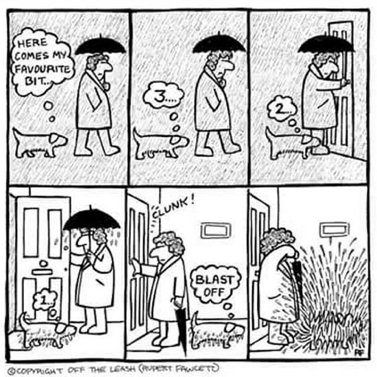 Rainy Day ☔ 🐾🐕 ----------------------------------------------------------------------------- Jackrussellinstagram Instadog Dogstagram Ilovemydog Ilovemyjackrussell Animalsofinstagram Animallover Dogselfie Ilovemyjackrussell Lovedogs Jackrussell Dog Jackrussellterrier Cutedogs DogAndChild Instadogs Jackstagram Mydogiscutest Dogs_of_instagram Ilovemyjrt Parsonrussell Instapet Instaanimal Jackrussellsofig Dogoftheday