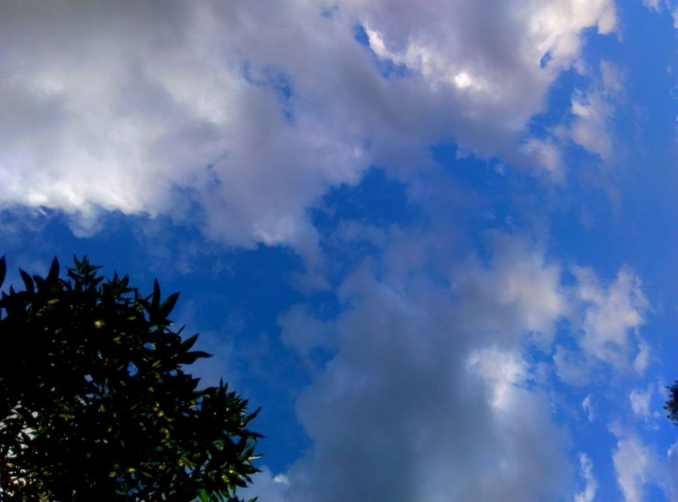 Cloud - Sky Sky Blue Nature Low Angle View Backgrounds No People Day Outdoors Summer Beauty In Nature Scenics Tree