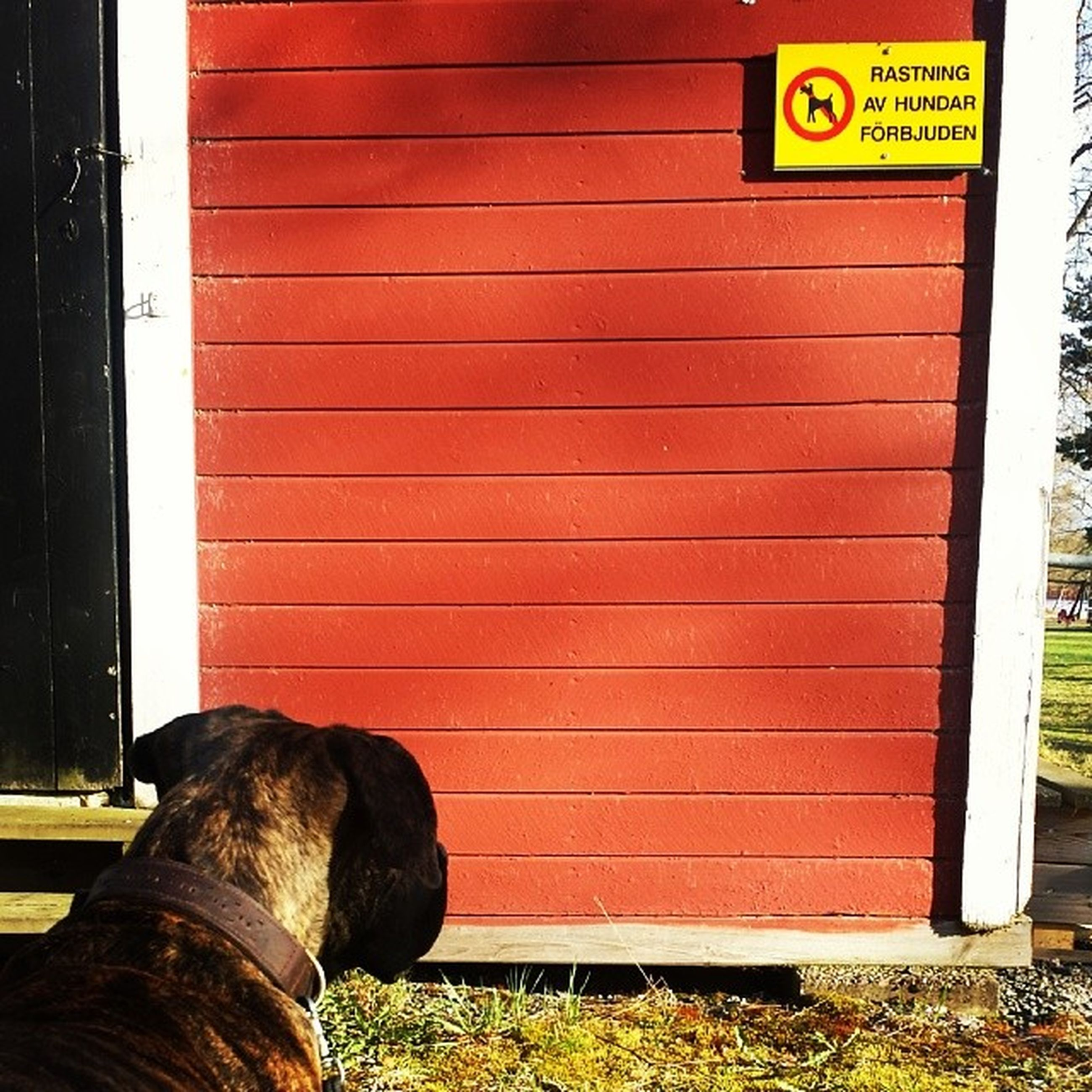 domestic animals, animal themes, mammal, one animal, pets, text, communication, dog, western script, door, closed, building exterior, red, built structure, outdoors, safety, day, wall - building feature, architecture, information sign