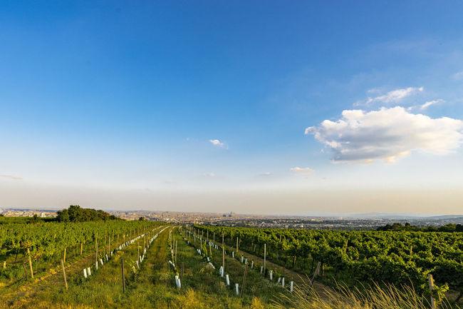 perfect location for summer evening on the Hills from Vienna. Blue Sky Cloud Heuriger Hidden Gems  Hidden Gems In Vienna Hills Horizon Over Land Vienna