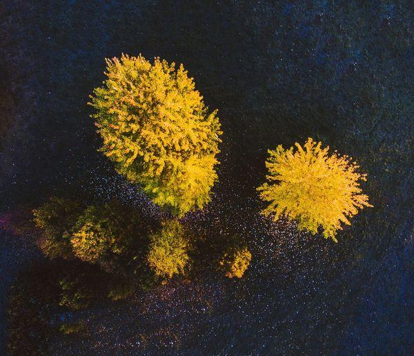 Yellow Flower Fragility Nature Growth Petal Freshness Plant Drone  Dronephotography Phantom 3 Phantom3advanced Dji Phantom Dji Europe Botany Autumn🍁🍁🍁 Lietuva A Bird's Eye View