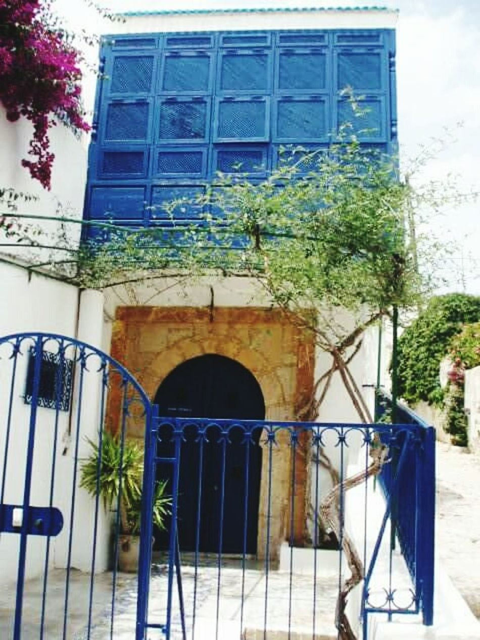 Architecture Architrcture Photography Collection Doors Blue White And Red Tunis
