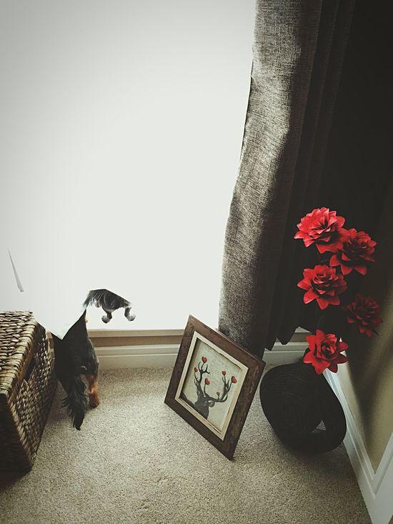 Pets Corner Bums Tails Curtain Neighbourhood Watch I Love My Dogs Pomchi Yorkie Russell