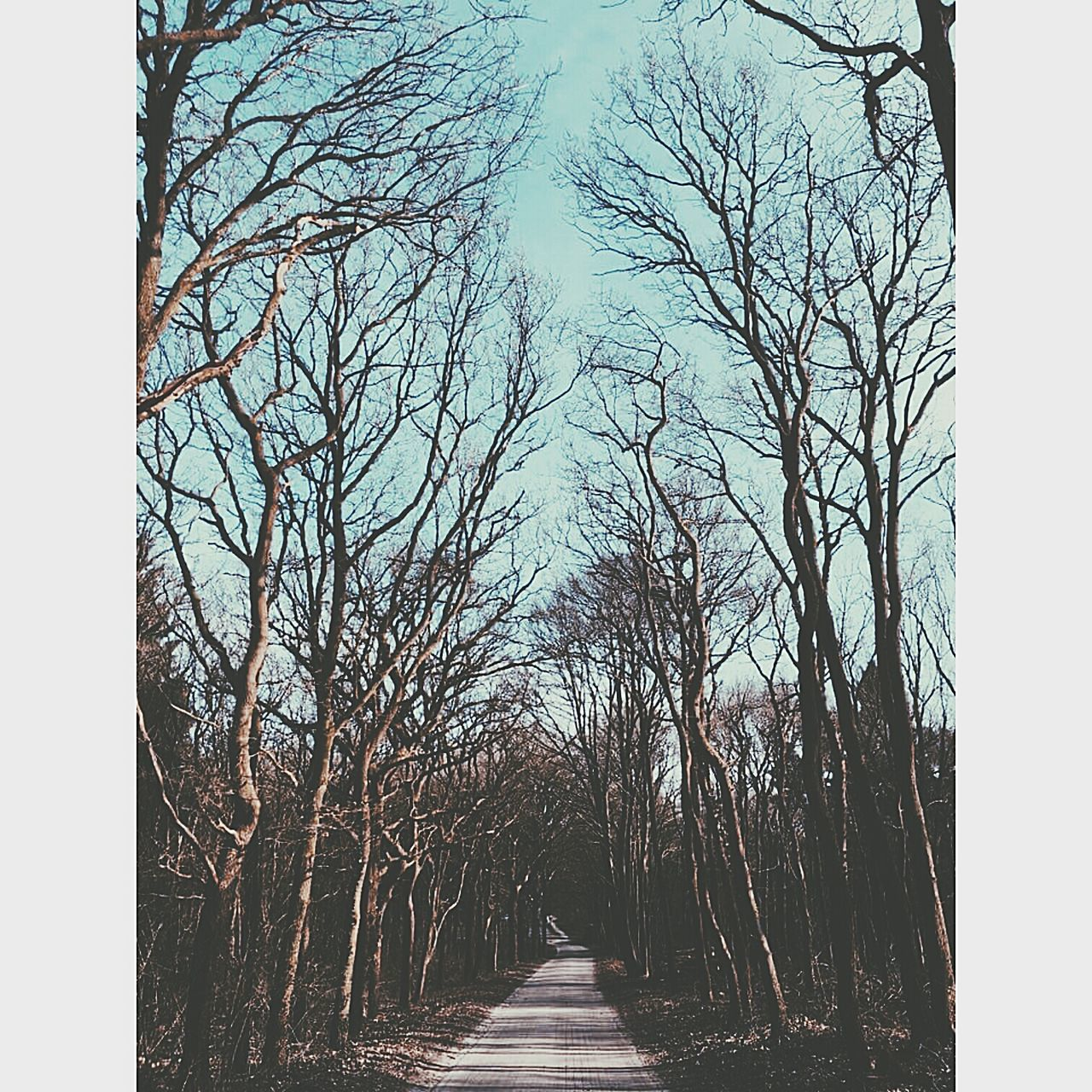 Into The Woods Bright Sky Trees Freedom World Peace Silence Different Perspective Lonely Fresh