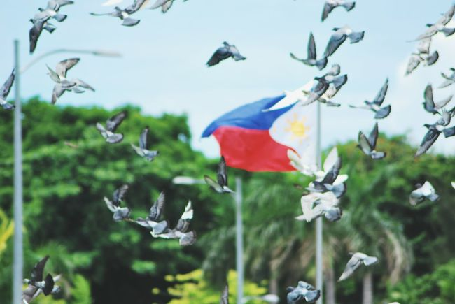 Freedom EyeEm Philippines: Our Independence Day 2016 Eyeem Philippines EyeEm Cagayan De Oro City EyeEm Manila