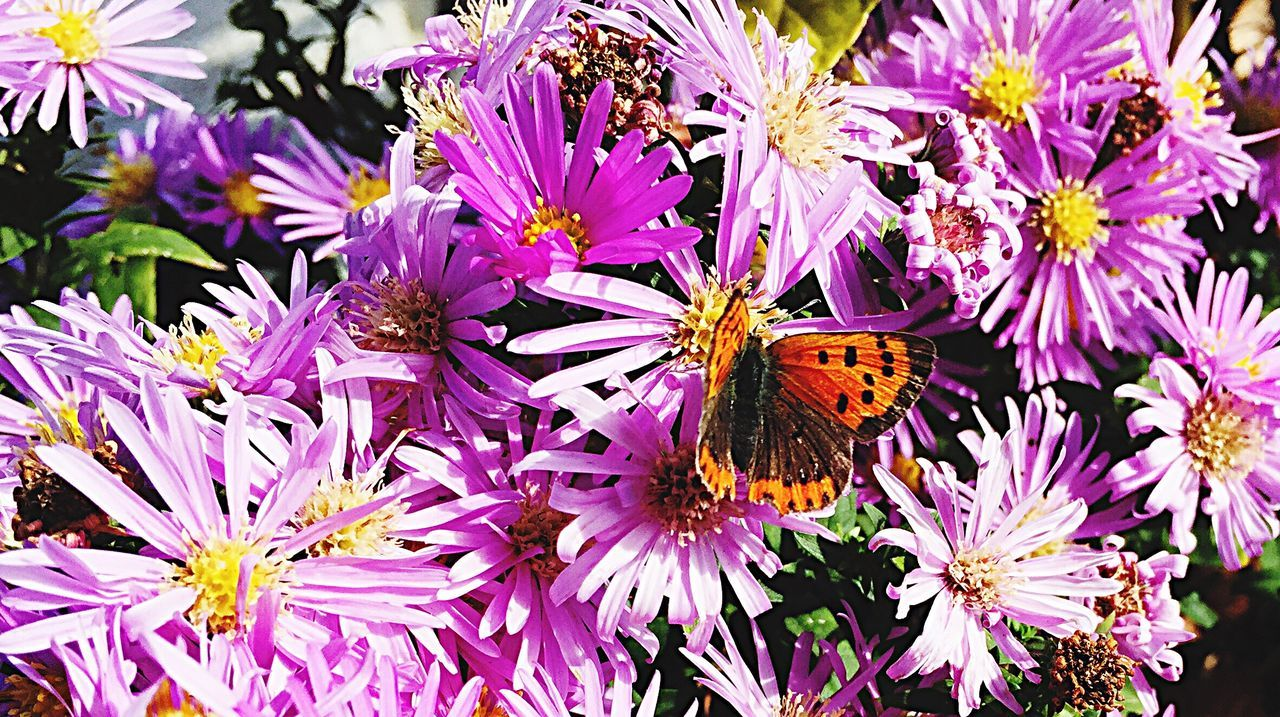 purple, flower, insect, animal themes, animals in the wild, nature, fragility, freshness, one animal, beauty in nature, growth, butterfly - insect, petal, no people, outdoors, plant, flower head, day, pollination, close-up