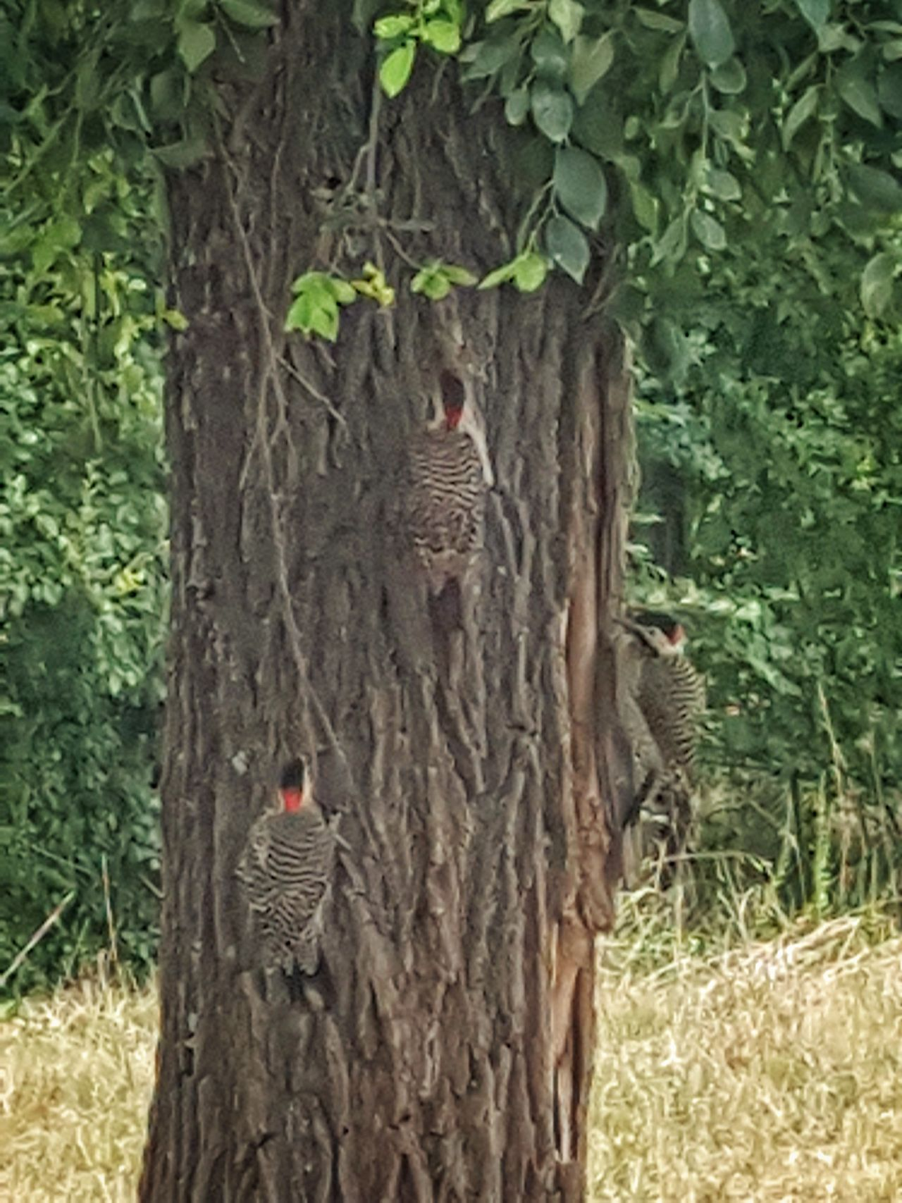 Birds Pajaro Carpintero Naturaleza Aves Bird Observation Trees Wild Life Work Carpinteros
