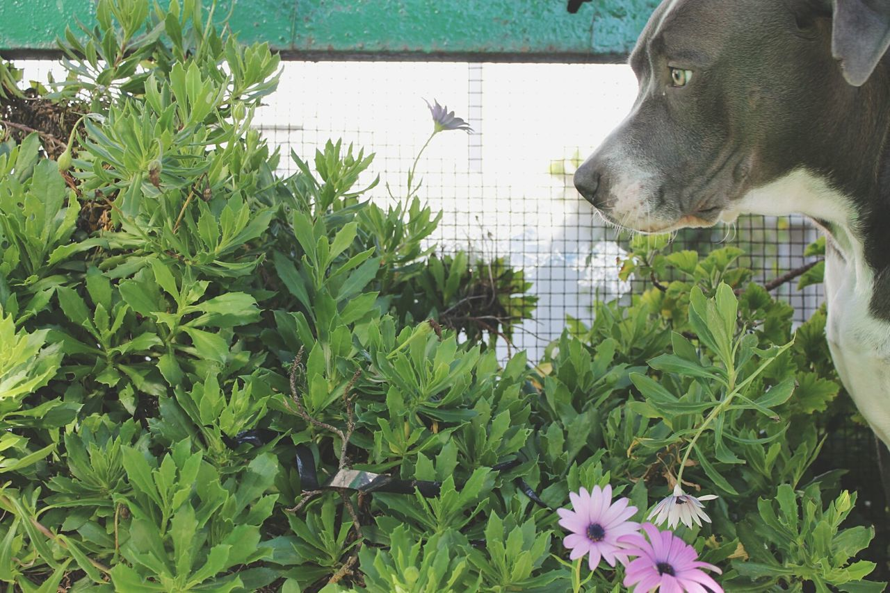 dog, one animal, pets, animal themes, plant, green color, leaf, domestic animals, day, growth, mammal, outdoors, nature, close-up, flower, no people