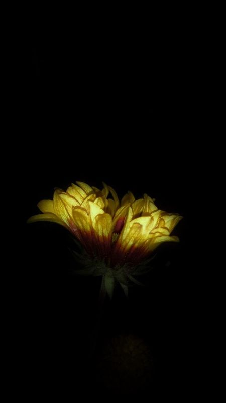 Yellow Flowers Petals Midnight In The Garden Of Good And Evil Samsung Galaxy Note III Yellow Flower Flower